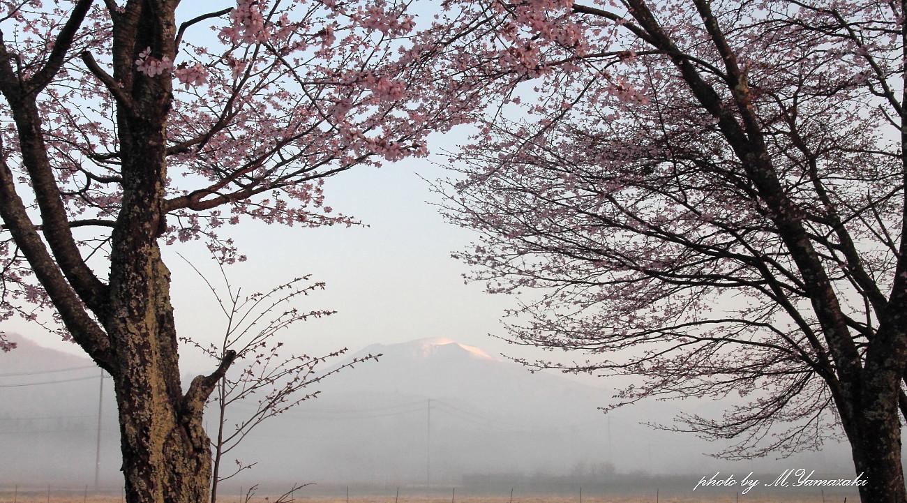 山の春とアオゲラ_c0217255_05533601.jpg