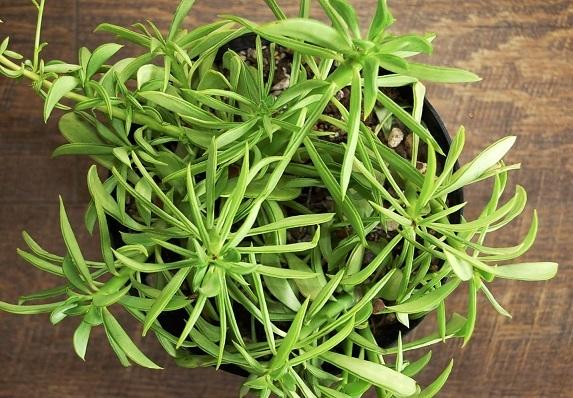McQueenの新しい植物♪_e0260759_11144724.jpg