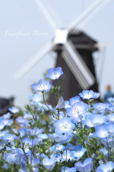 ブルーとピンクの花 **_d0344864_15274926.jpg