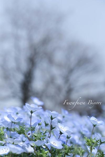ブルーとピンクの花 **_d0344864_15281022.jpg