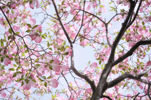ブルーとピンクの花 **_d0344864_15281595.jpg