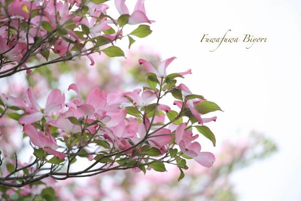 ブルーとピンクの花 **_d0344864_15281907.jpg