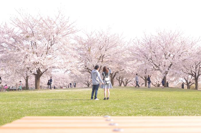 新井田公園で体感する桜のセカイ_c0048667_00032611.jpg