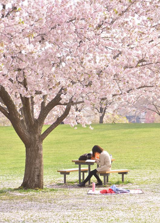 新井田公園で体感する桜のセカイ_c0048667_00105021.jpg