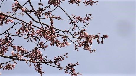 大通公園の春景色 噴水・木蓮・こぶし_f0362073_18061286.jpg