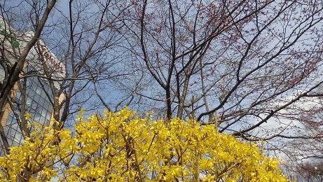 大通公園の春景色 噴水・木蓮・こぶし_f0362073_18071394.jpg