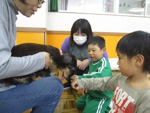 ゆり組 動物触れ合い教室_c0212598_18021698.jpg