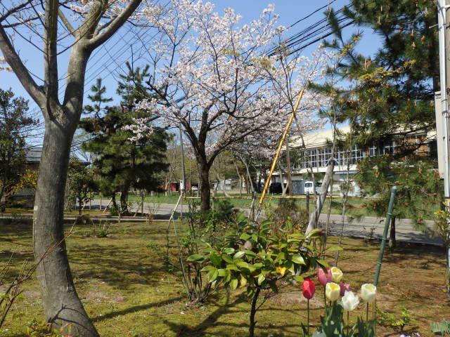 桜のレクイエム 塩崎貞夫展 <樹下美術館・上越市>_e0138627_15210267.jpg