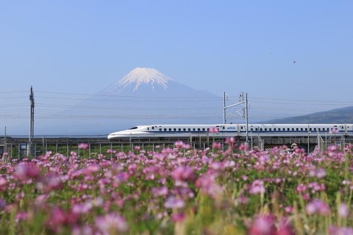富士市のれんげと富士山と新幹線。_f0348831_21353983.jpg