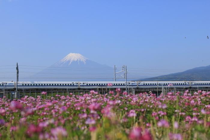 富士市のれんげと富士山と新幹線。_f0348831_21354672.jpg