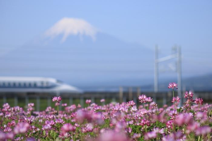 富士市のれんげと富士山と新幹線。_f0348831_21355154.jpg