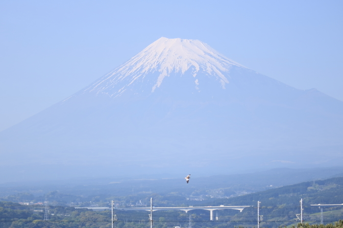 富士市のれんげと富士山と新幹線。_f0348831_21360074.jpg