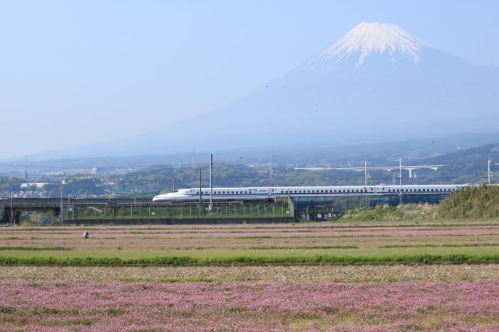 富士市のれんげと富士山と新幹線。_f0348831_21372022.jpg