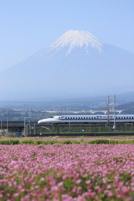 富士市のれんげと富士山と新幹線。_f0348831_21400556.jpg