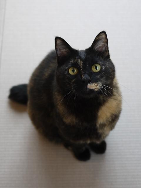 猫のお留守番 ペコちゃん編。_a0143140_14391717.jpg