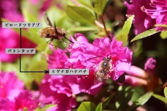 b0363649_23234412.jpg