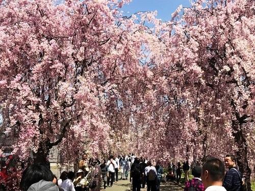 喜多方市で「ラーメン&花見」_e0211357_10243126.jpg