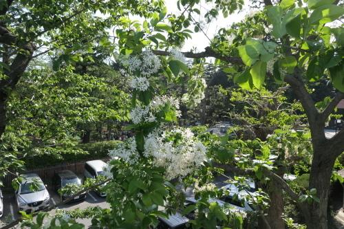白い花の木_d0193569_08255015.jpg