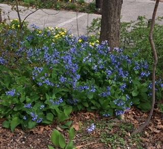 花の都 ニューヨーク_e0350971_06311745.jpg