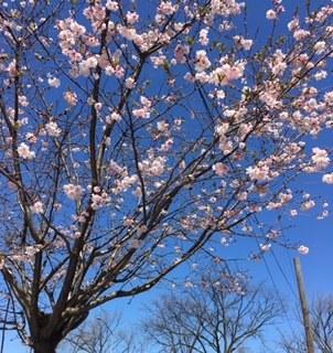 花の都 ニューヨーク_e0350971_06344890.jpg