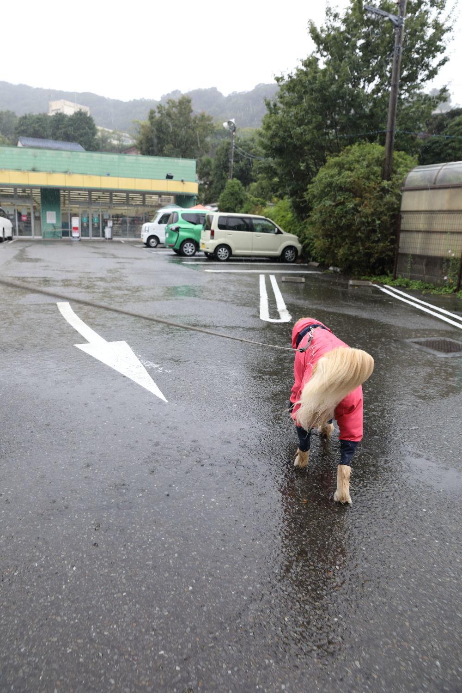 雨の日_b0275998_11264158.jpg