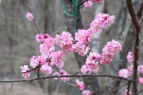 お隣の花たち&まるこちゃんの事_c0090198_18475257.jpg
