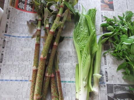 今年の普賢象・食べられる草を摘む_a0203003_15544921.jpg