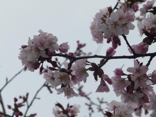 季節の花だより_b0198109_16511311.jpg