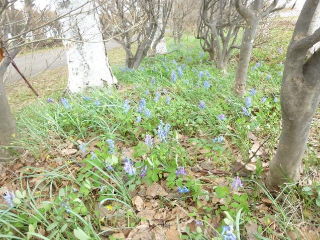 季節の花だより_b0198109_16514073.jpg