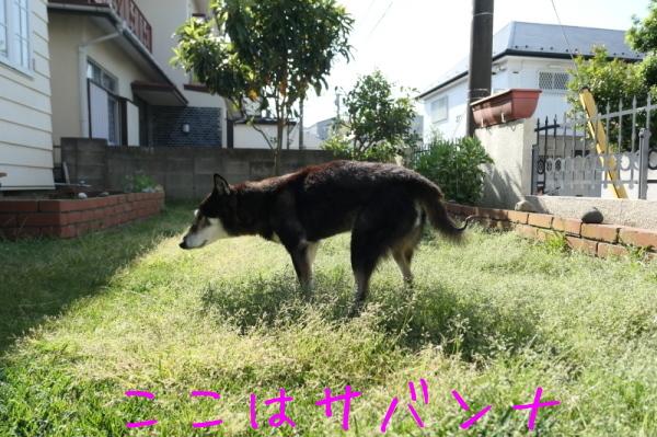 ジェンちゃんの週末の朝_f0369014_10371771.jpg