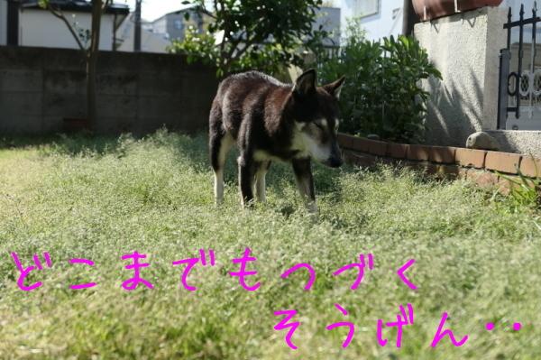 ジェンちゃんの週末の朝_f0369014_10444472.jpg
