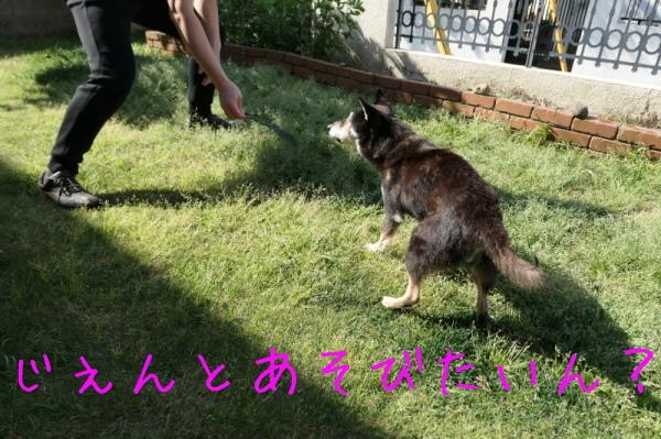 ジェンちゃんの週末の朝_f0369014_10543479.jpg