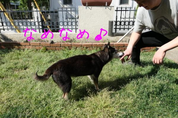 ジェンちゃんの週末の朝_f0369014_10574340.jpg