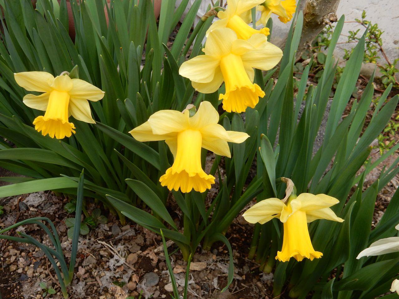 低温安定でも春らんまん_c0025115_21372658.jpg