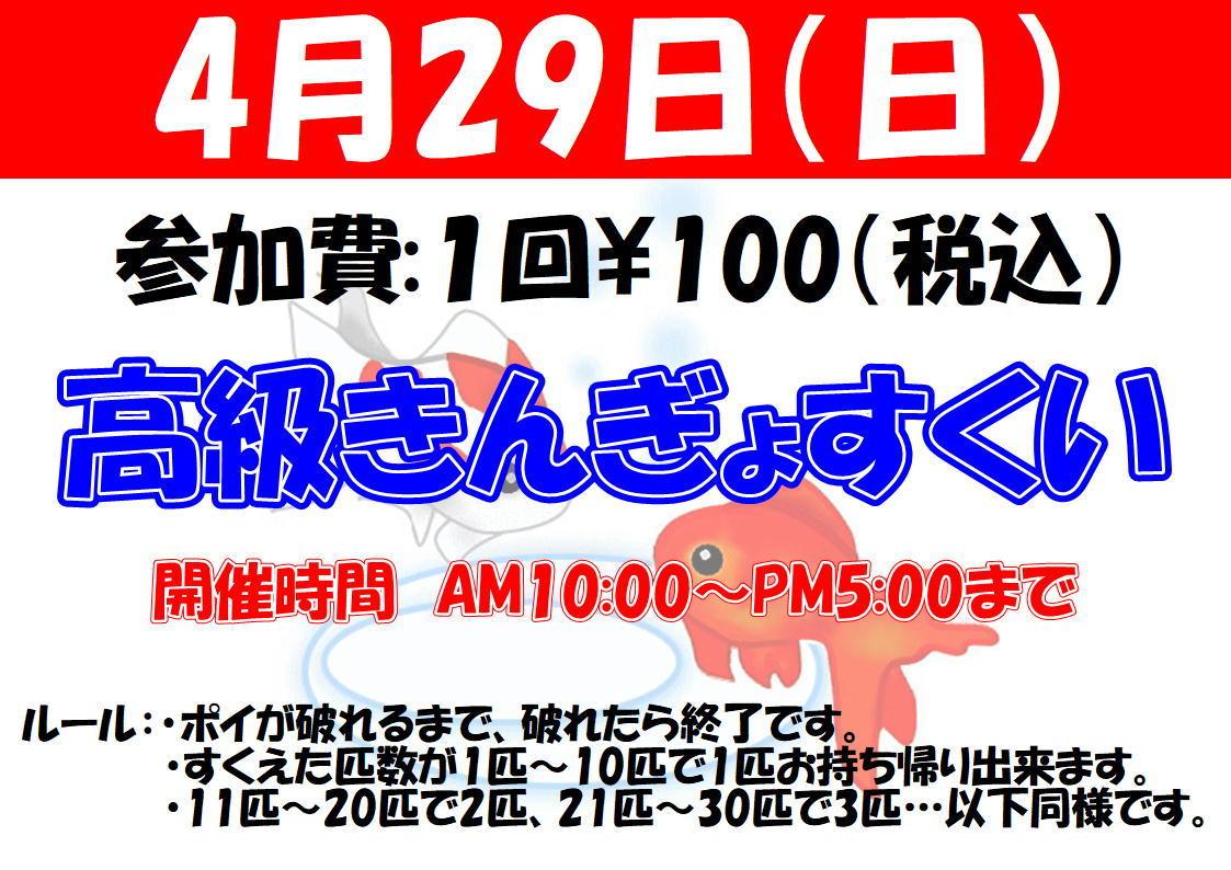 180429 高級金魚すくい!!_f0189122_13261998.jpg