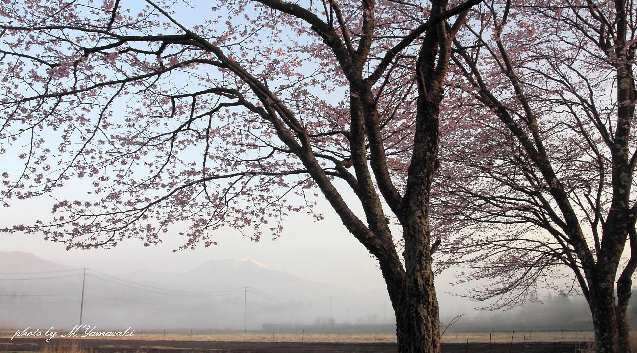 山の春とノビタキ_c0217255_06462364.jpg