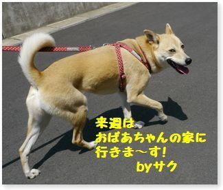 c0006757_21433951.jpg