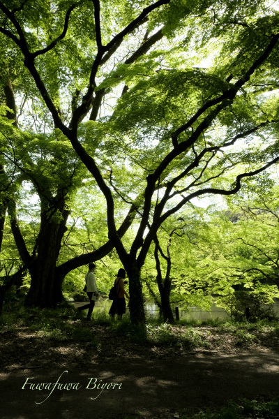 緑が美しい春 **_d0344864_19241369.jpg