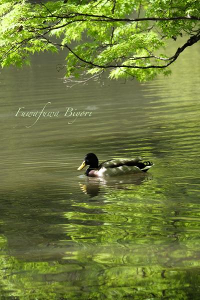 緑が美しい春 **_d0344864_19243828.jpg