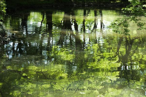 緑が美しい春 **_d0344864_19451816.jpg