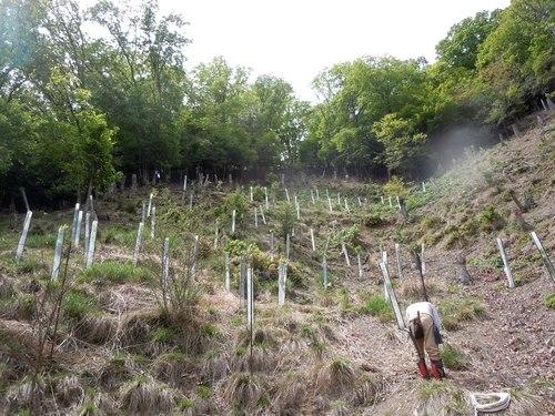 新緑に包まれながらクヌギ苗を植える_b0102572_16505729.jpg