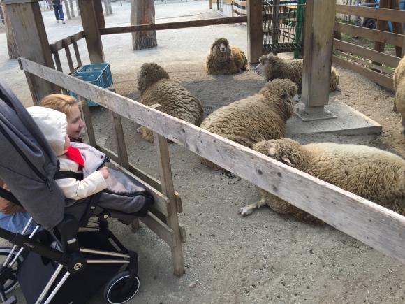 円山動物園_a0165709_19105834.jpg