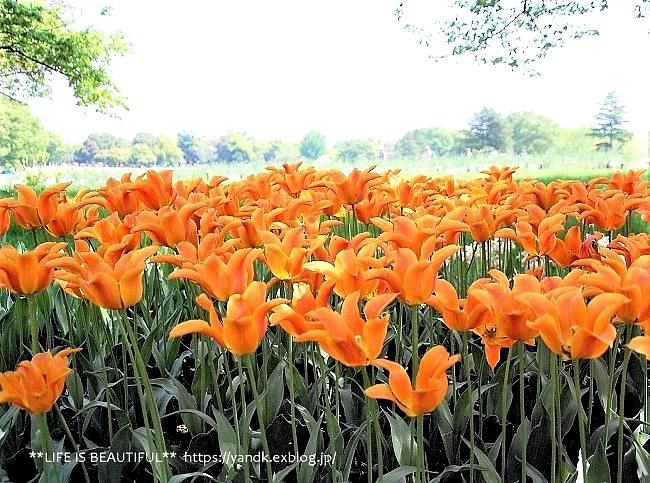 新緑の昭和記念公園_d0083623_14045769.jpg