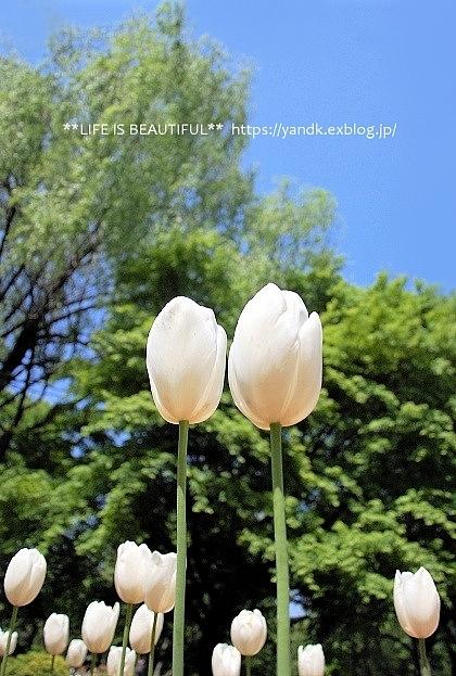新緑の昭和記念公園_d0083623_14051766.jpg
