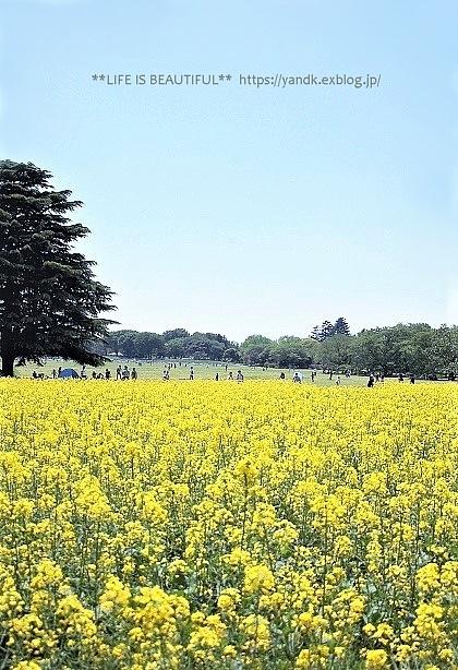 新緑の昭和記念公園_d0083623_14060562.jpg