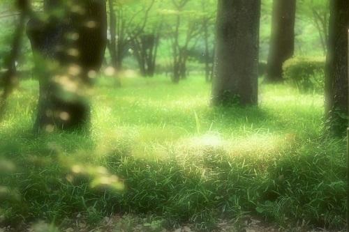 新緑の中で、、、_d0264733_12004621.jpg