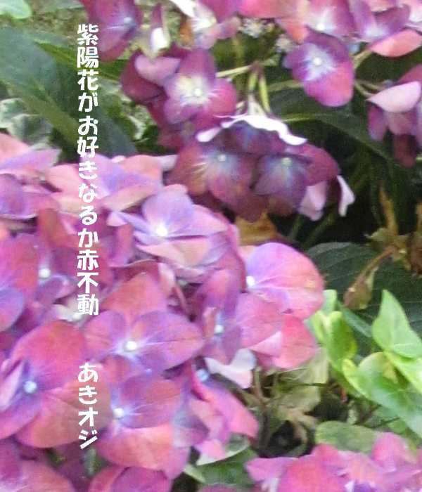 f0117041_05393976.jpg