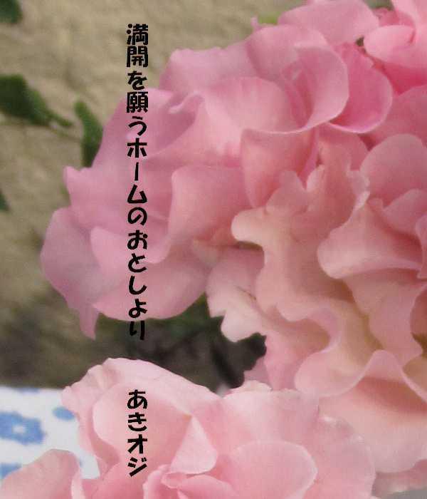 f0117041_20483567.jpg