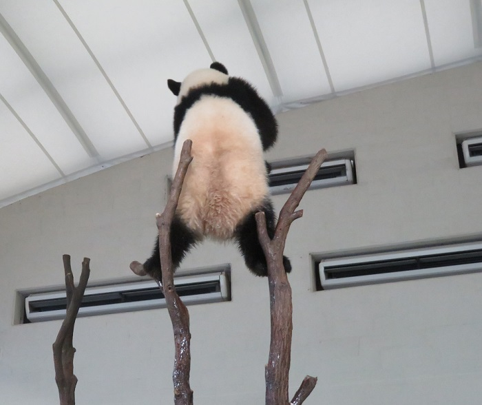 アドベン・ほぼパンダ(≧▽≦)_f0002743_2215963.jpg