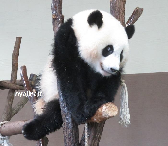 アドベン・ほぼパンダ(≧▽≦)_f0002743_2222741.jpg